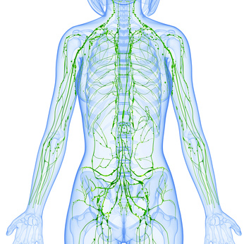 Massage Therapy Kelowna - 3D Anatomy of female lymphatic system